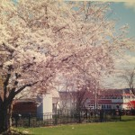 Rick Milton, Newburgh Waterfront in Bloom
