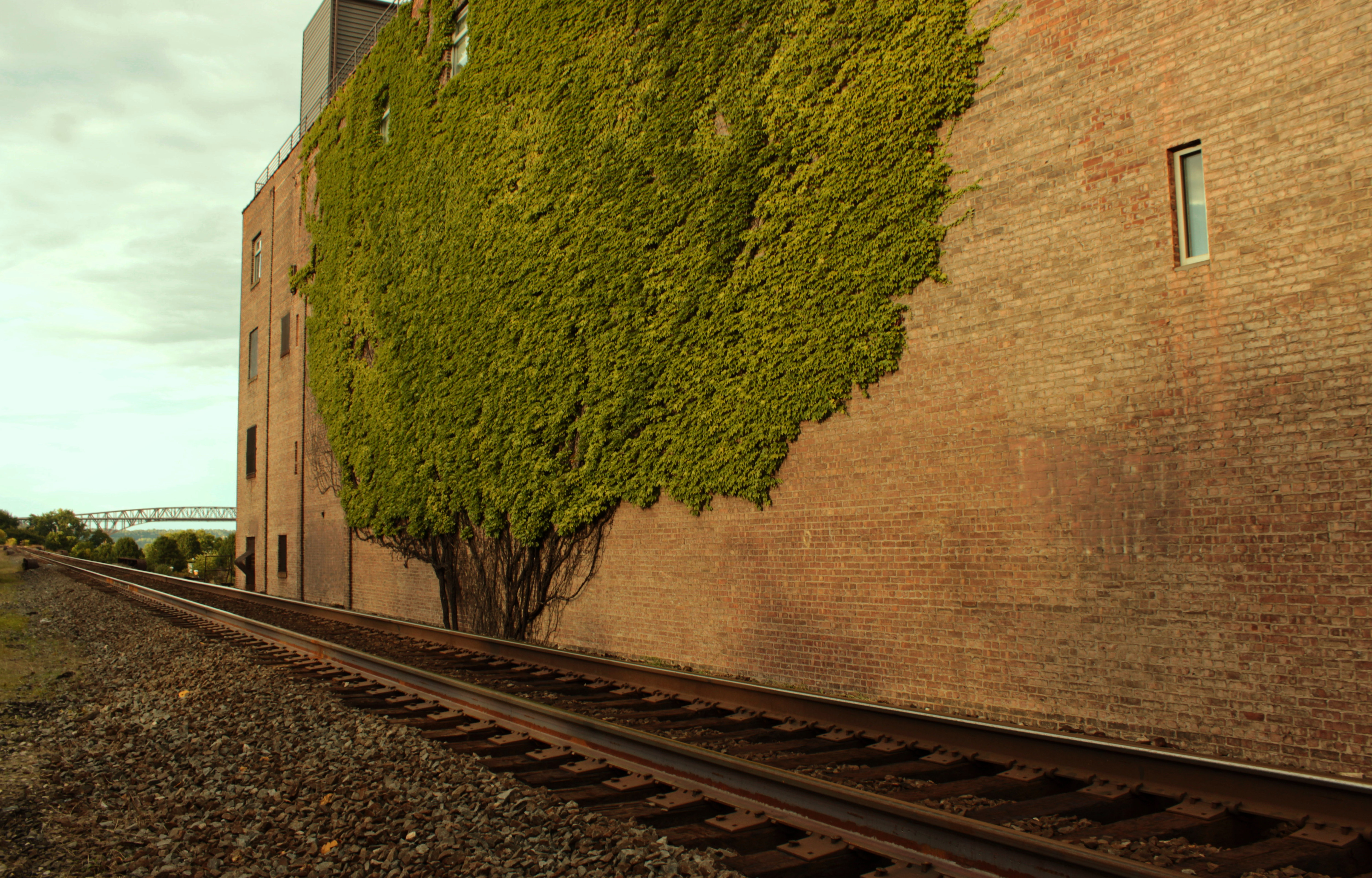 """The Stamped Tree"" captured by Steven Rosas was taken behind the Downing Film Center"